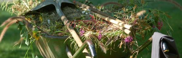 Periyodik Bahçe Bakımı ve Teknik Danışmanlık